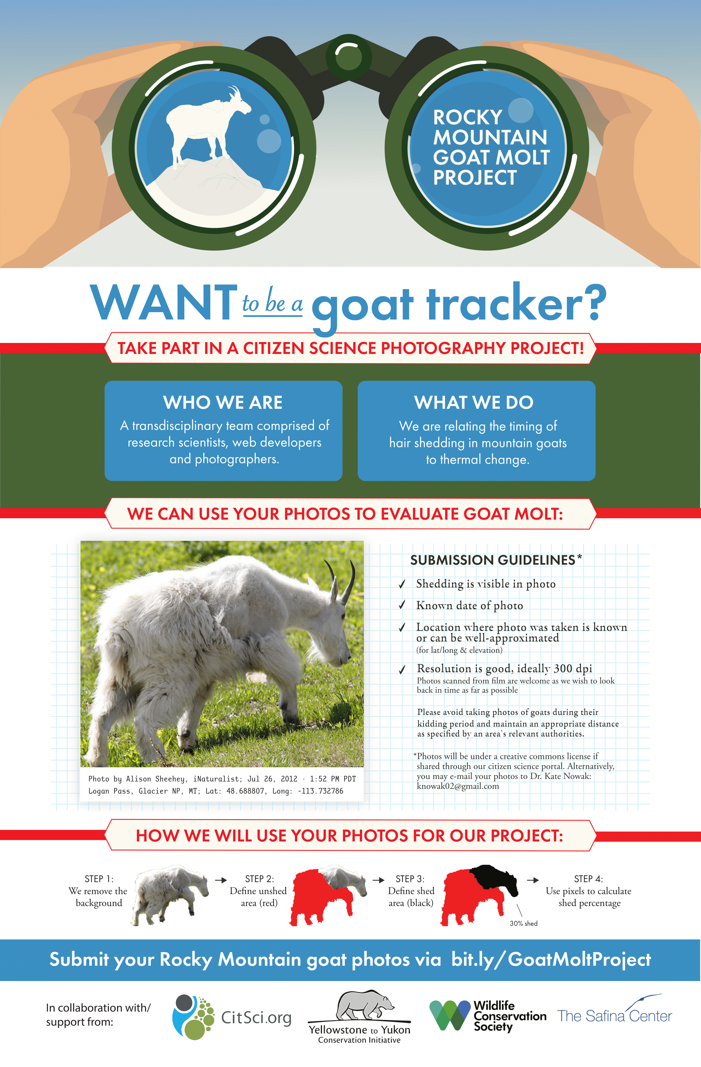 Citizen Science Project: The Mountain Goat Molt Project